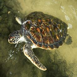 Serangan Island Turtle Conservation Centre