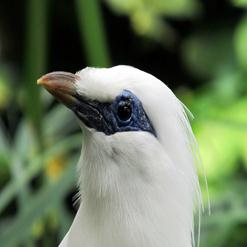 FNPF Bird Sanctuary