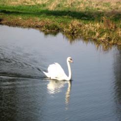 Tottenham Marsh