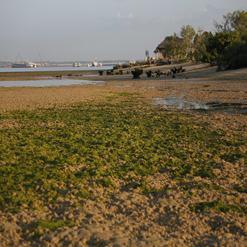 Mangrove Information Centre